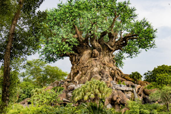 Disney vacation for adults - Animal Kingdom