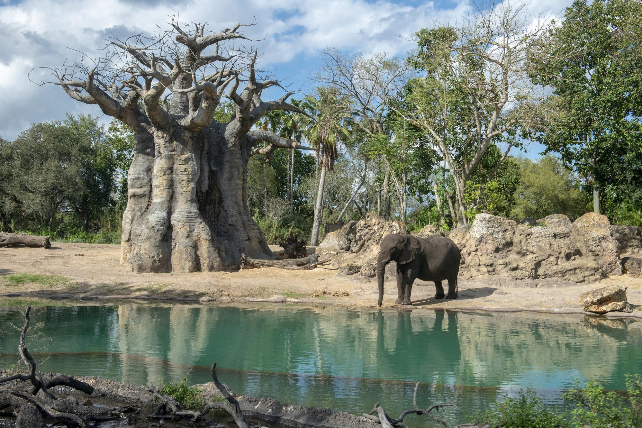 animal kingdom africa